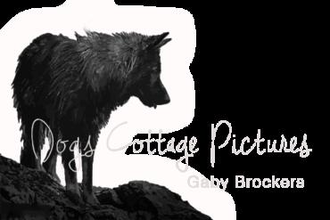 tierfoto dogs cottage - Gaby Brockers